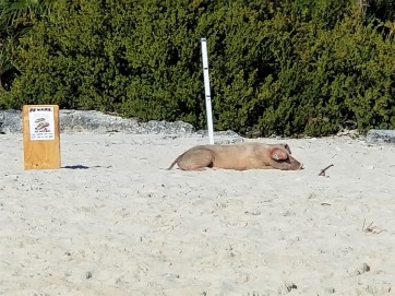 Sunning on the Beach