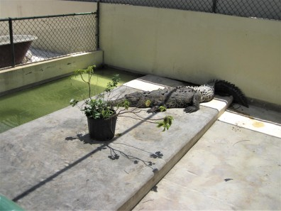 Croc Nursery
